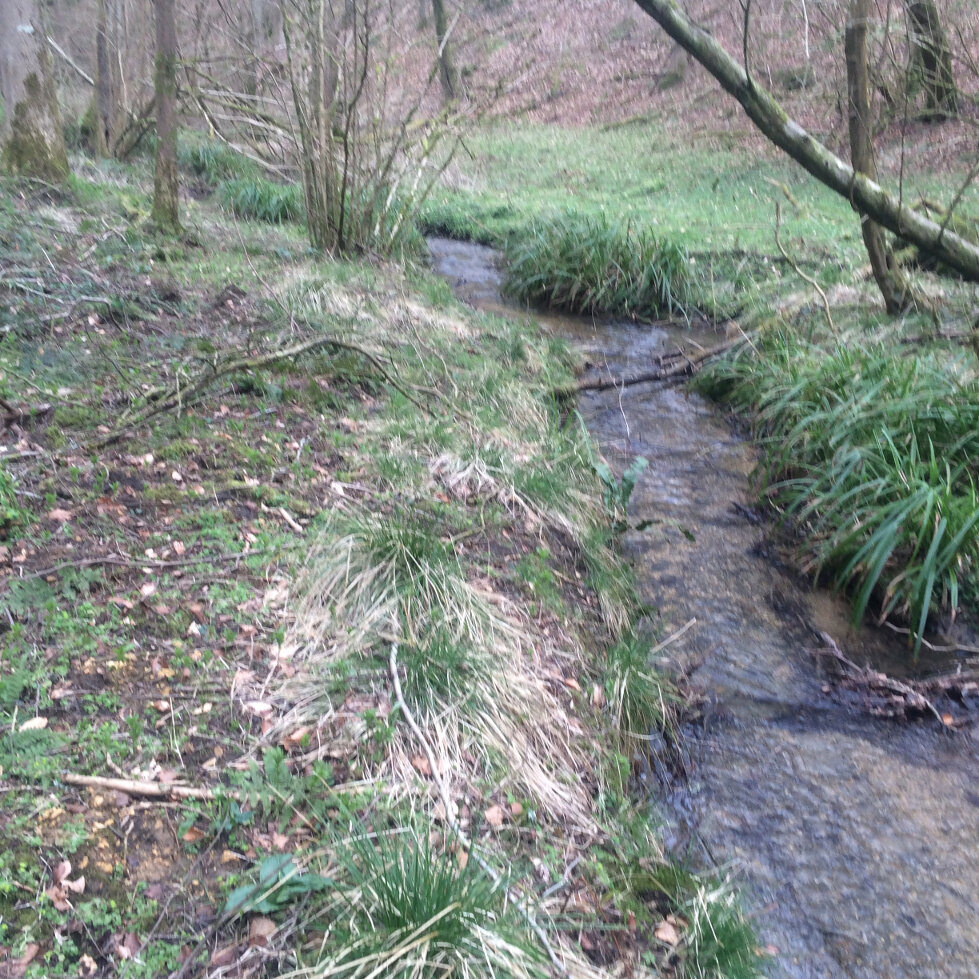 The Source of The Frome (11)