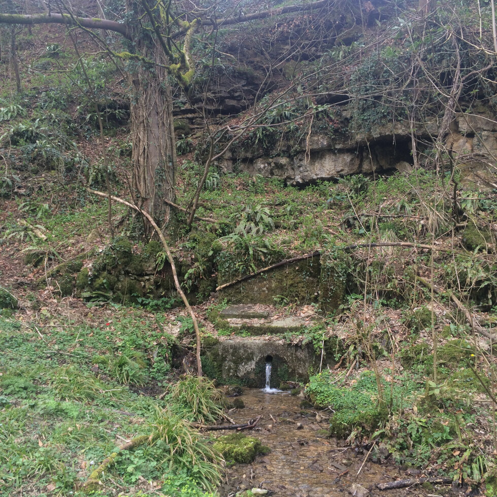 The Source of The Frome (12)