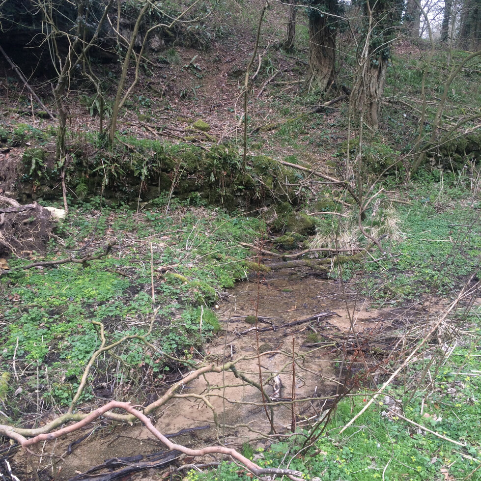 The Source of The Frome (15)
