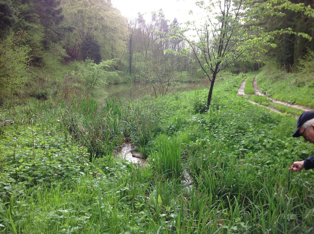 Walking the Slad Brook (18)