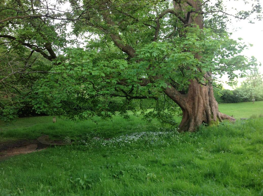 Hawkwood Spring (1)