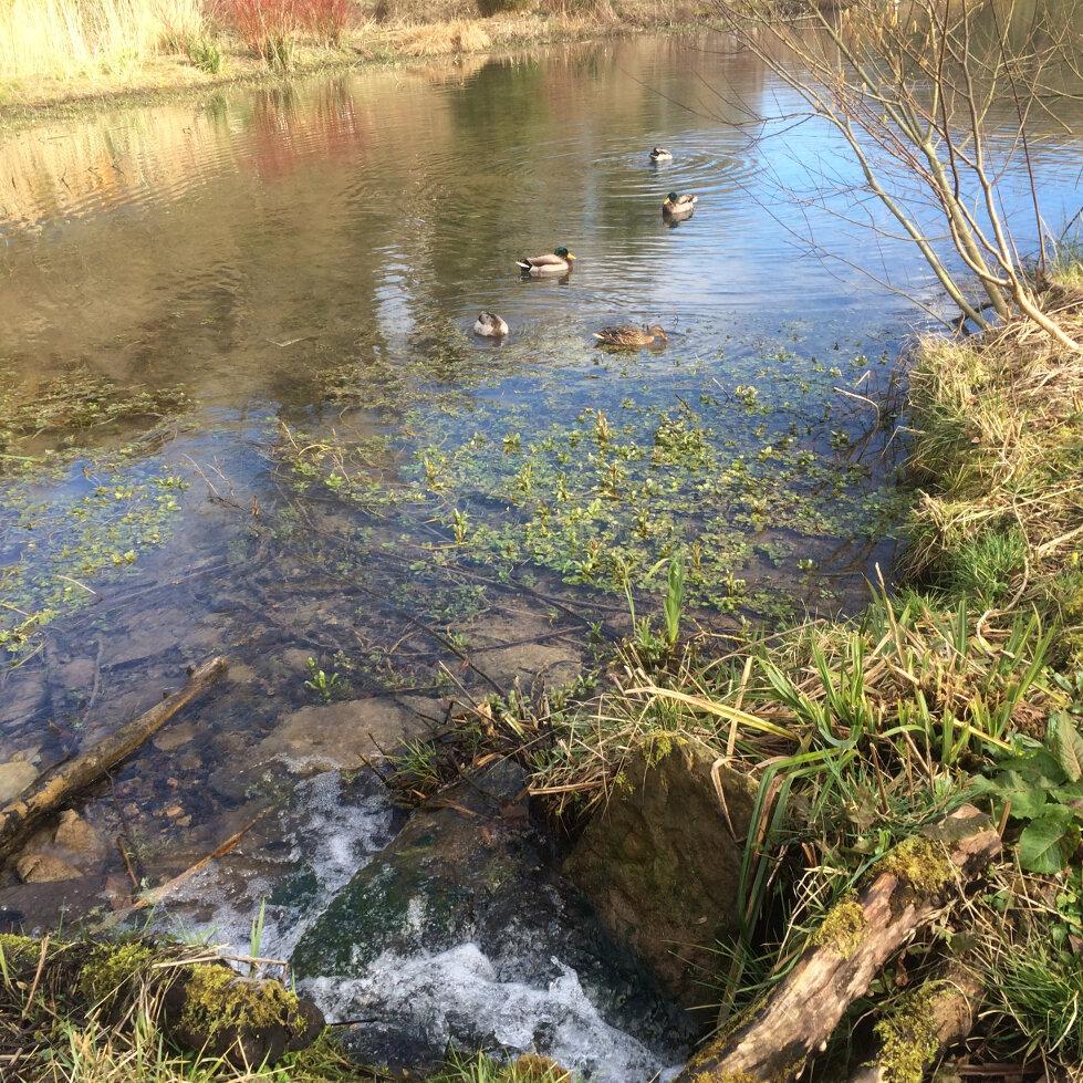 Springs and Stroud Mills (2)