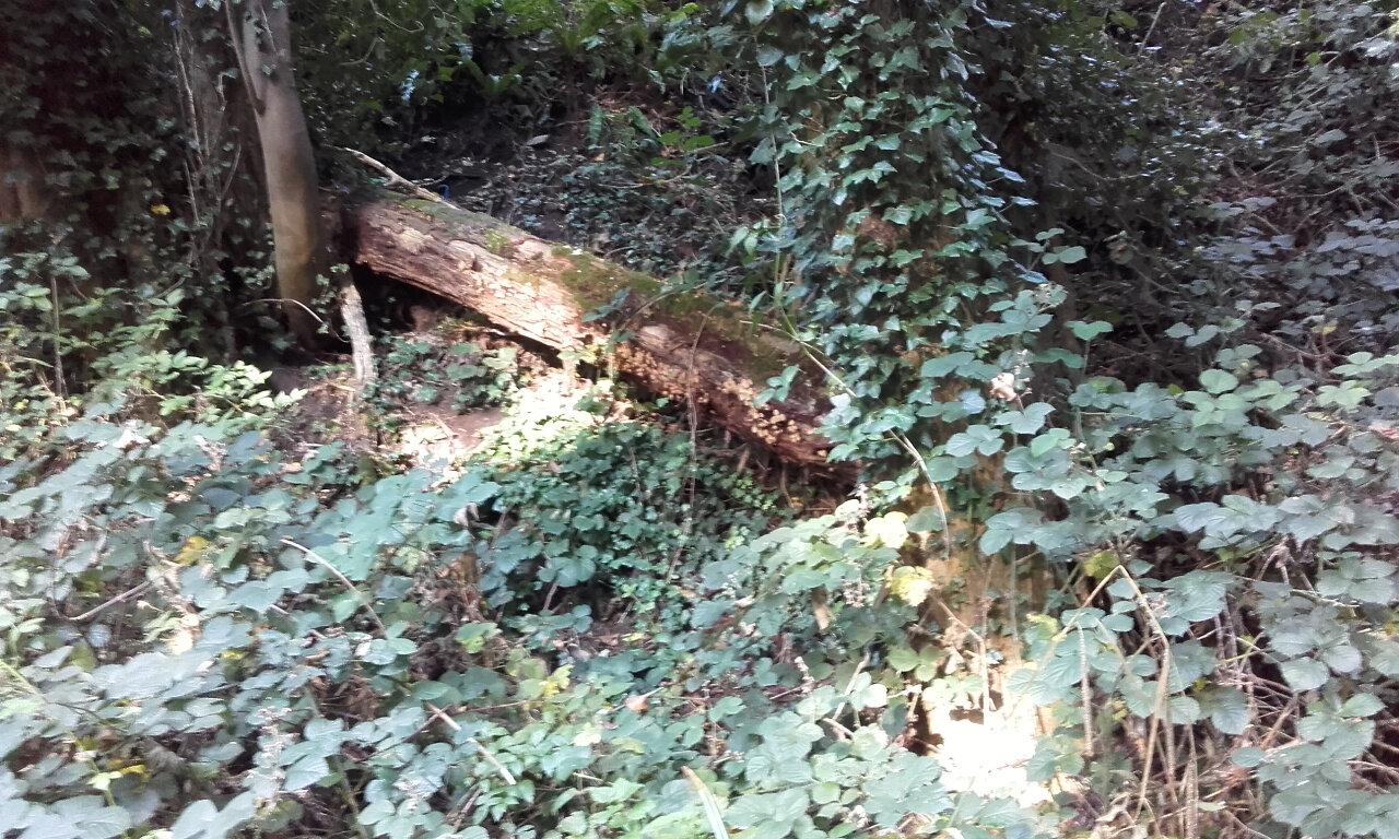 Hidden Stroud Walks (7)