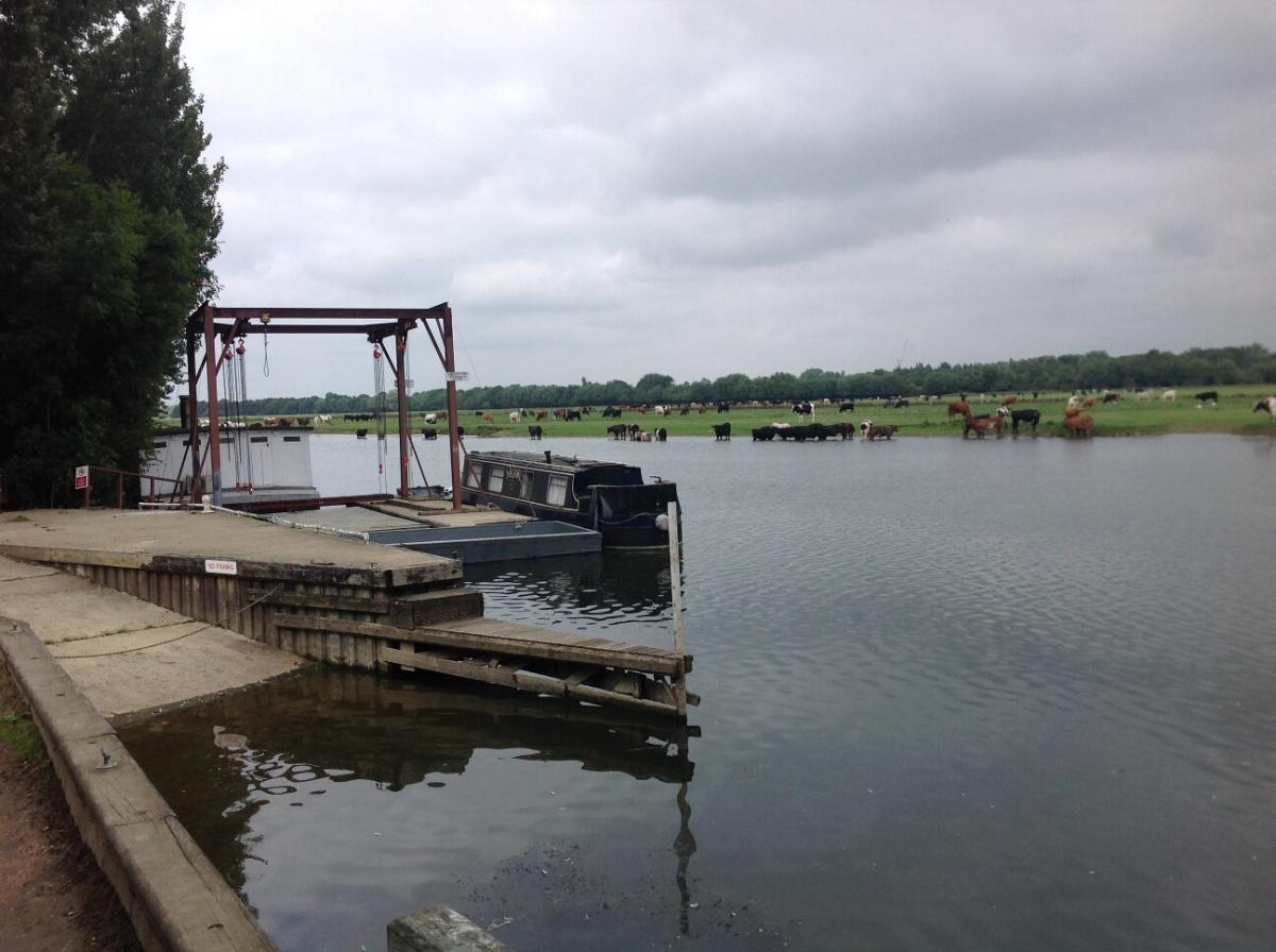 Swans, Bridges, Feudalism and Modernity: From Newbridge to Oxford