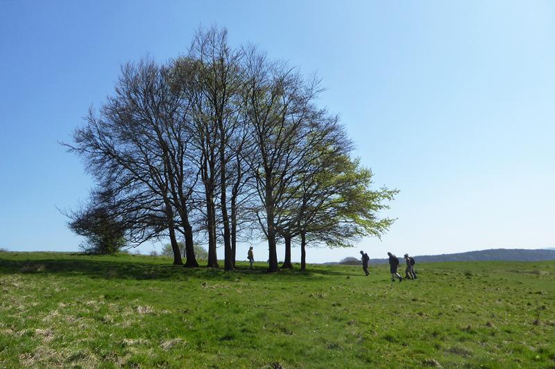 Haresfield_TreeGroup_PhotoDeborahRoberts_P1380469_LowRes180
