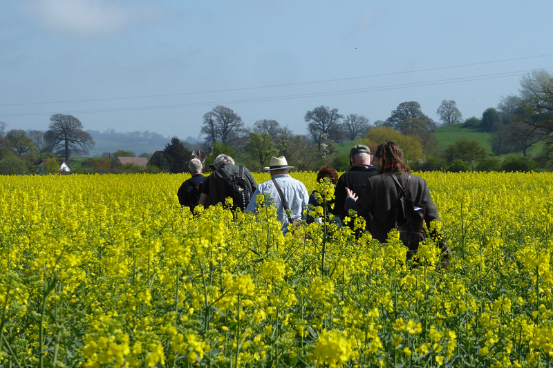 WalkingThroughRapeField_Haresfield_CopyrightDeborahRoberts_P1380377_LowRes72