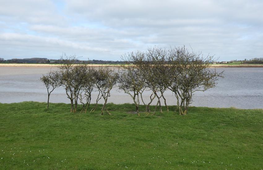 3.Arlingham_Adj_RiverSevern_Bank_Trees_P1070573_LowRes
